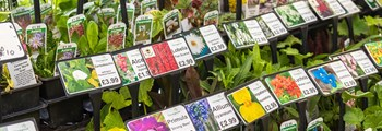 Opening of garden centres welcomed as Wales' ornamental growers facing significant challenges…