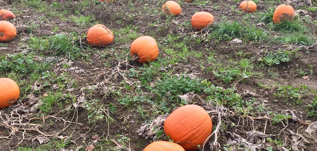Weed Control in Pumpkin