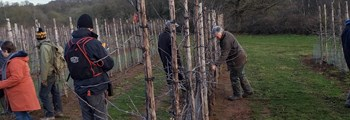 Notes from Pruning Workshop Helios Orchard, Pool Hill Newent